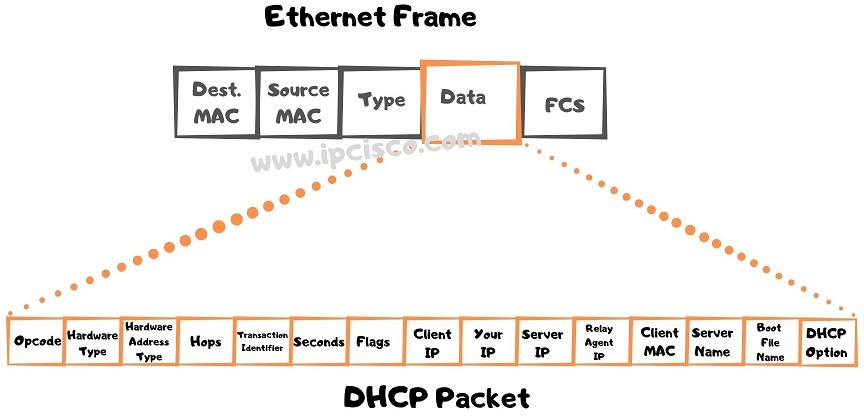 ethernet-frame-and-dhcp-packet-dhcp-option