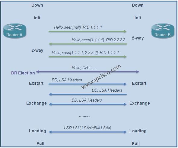 OSPF-Neighbourship-States