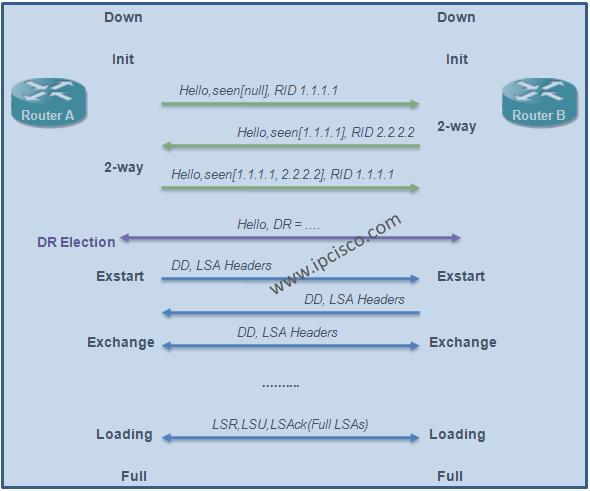 OSPF (Open Shortest Path First) Neighbourship States, OSPF Adjacency