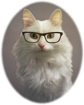 cats-job-posts