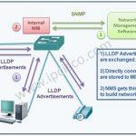 how-lldp-works
