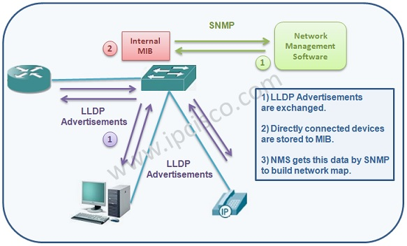 How LLDP Works, LLDP Mechanism