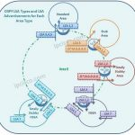 ospf-lsa-types-and-advertisements-k